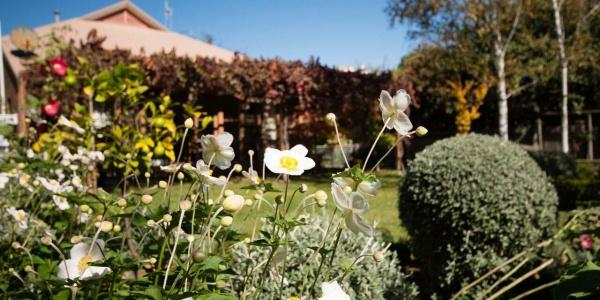cadogan-garden2